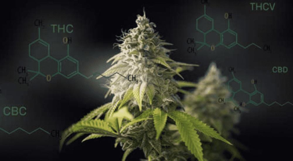 Cannabis effetti positivi