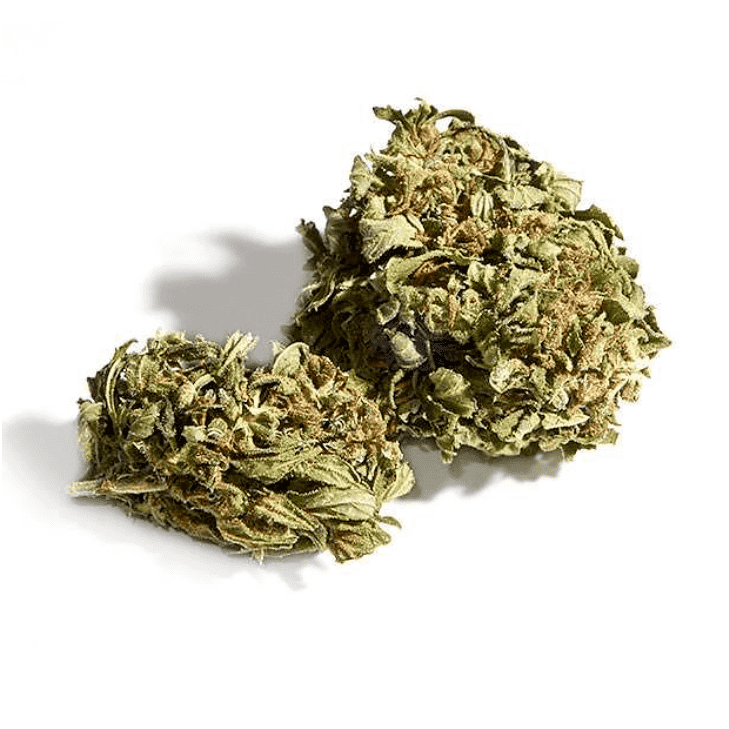 Eletta Campana Orange Bud