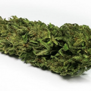 fiore di canapa sativa cheese bud